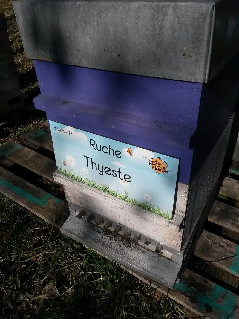 La ruche Thyeste
