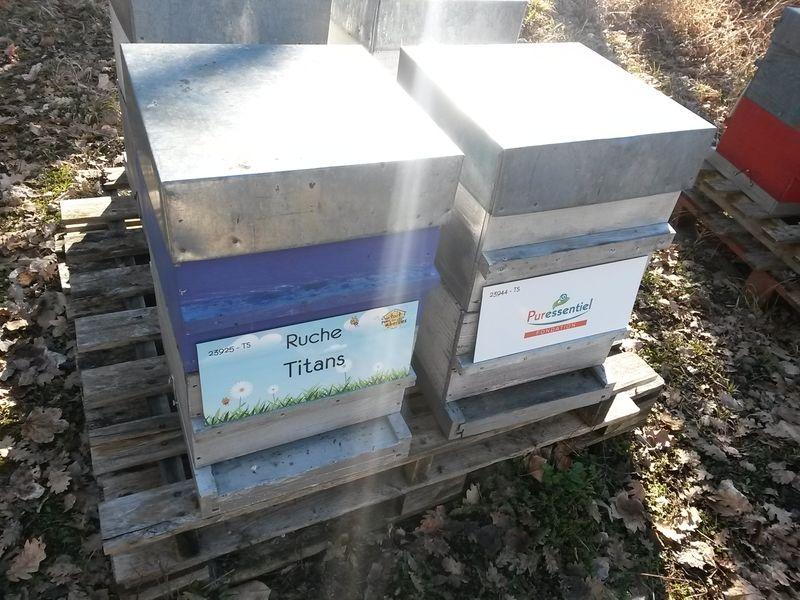 La ruche Titans