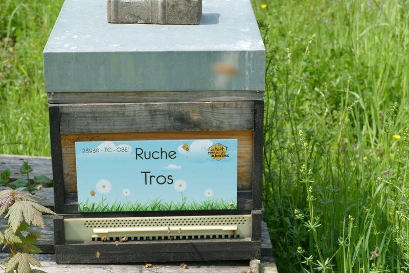 La ruche Tros