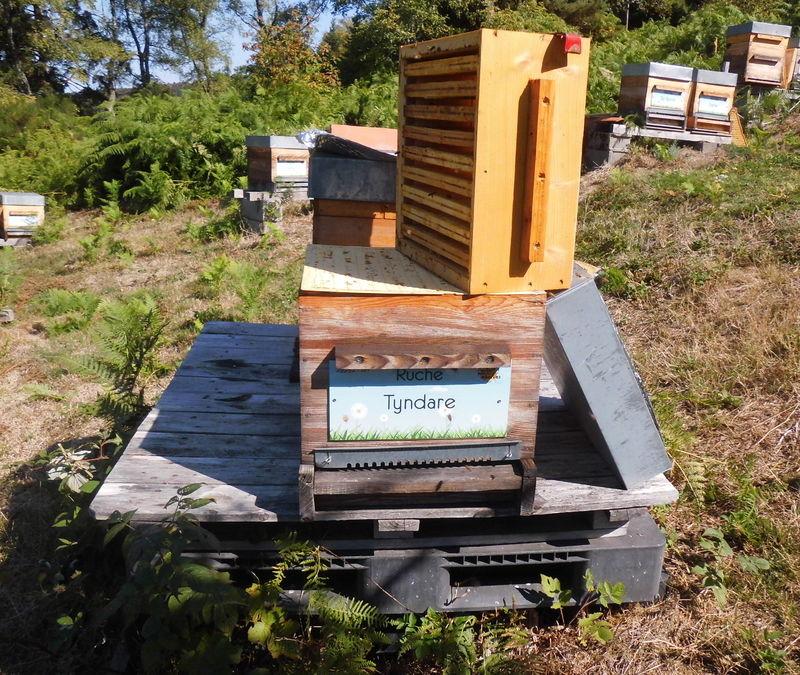 La ruche Tyndare