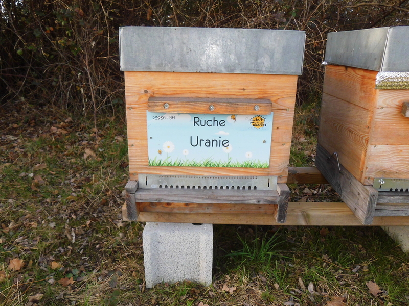 La ruche Uranie