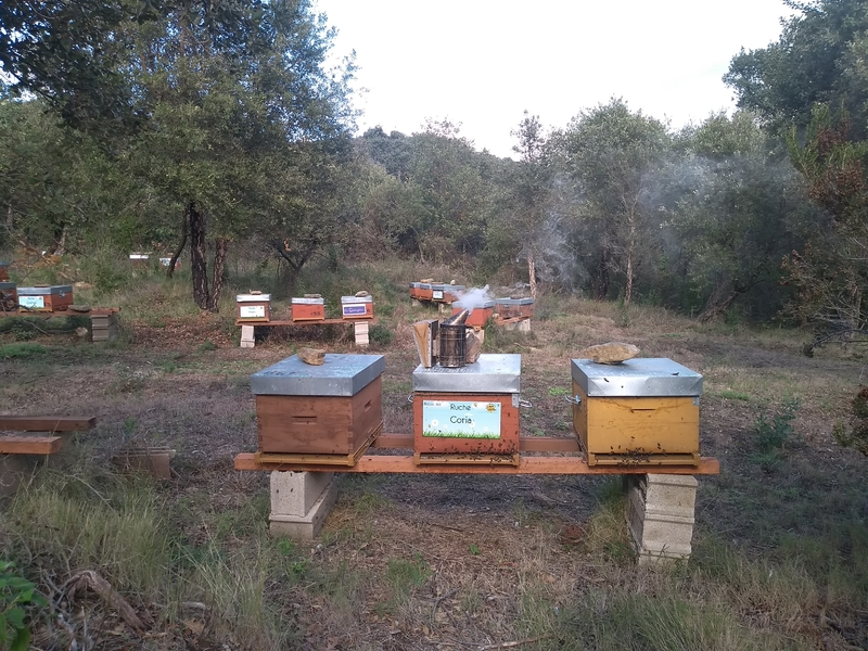La ruche Coria