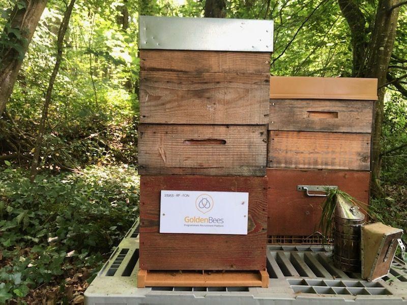 La ruche Golden bees