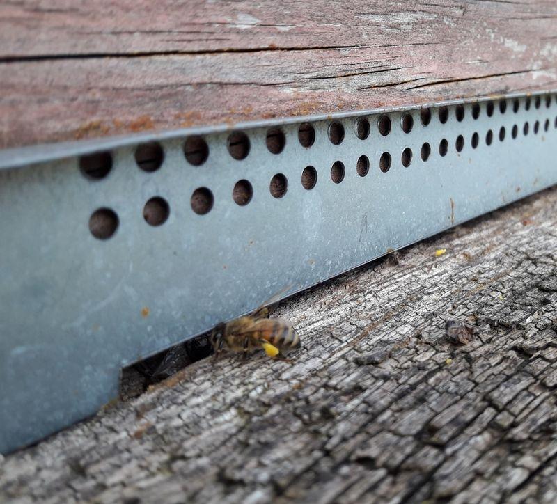 La ruche DevCSI