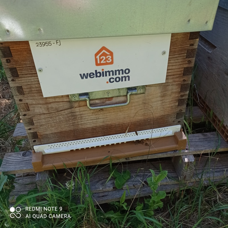 La ruche 123webimmo.com velaux/pays salonais