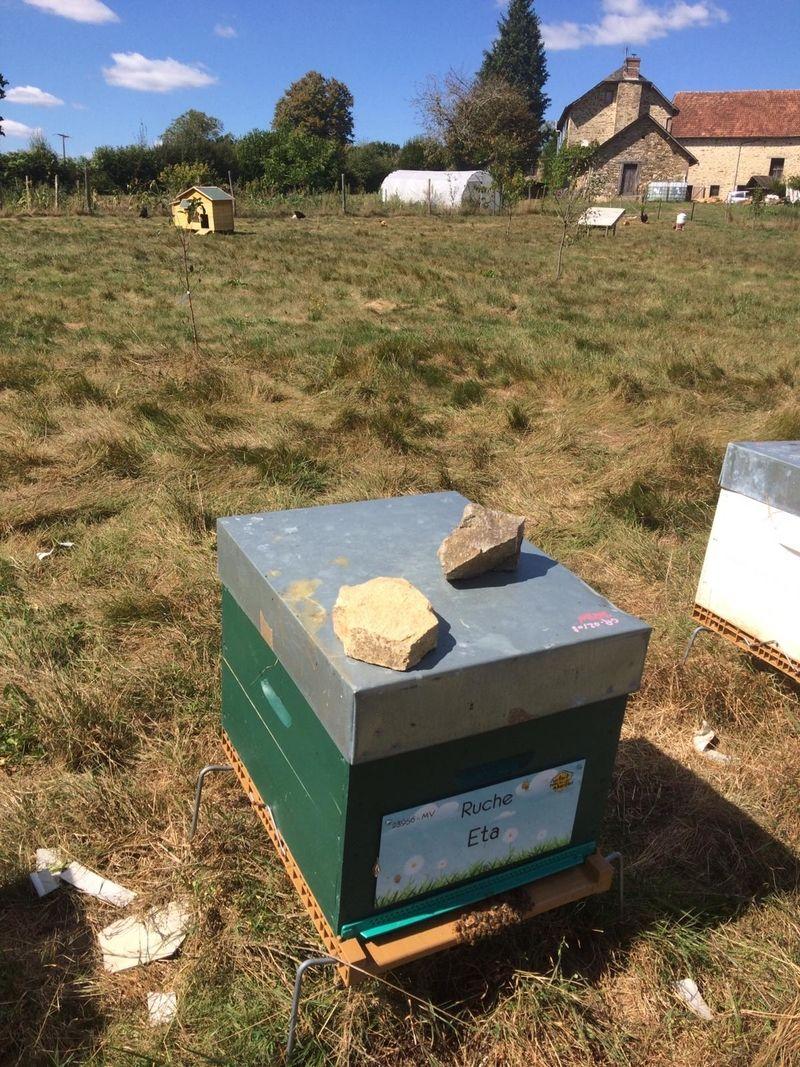 La ruche Eta