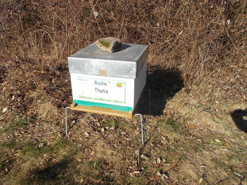La ruche Theta