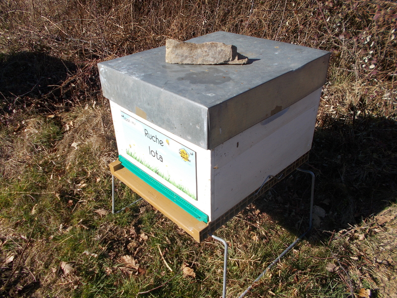 La ruche Iota