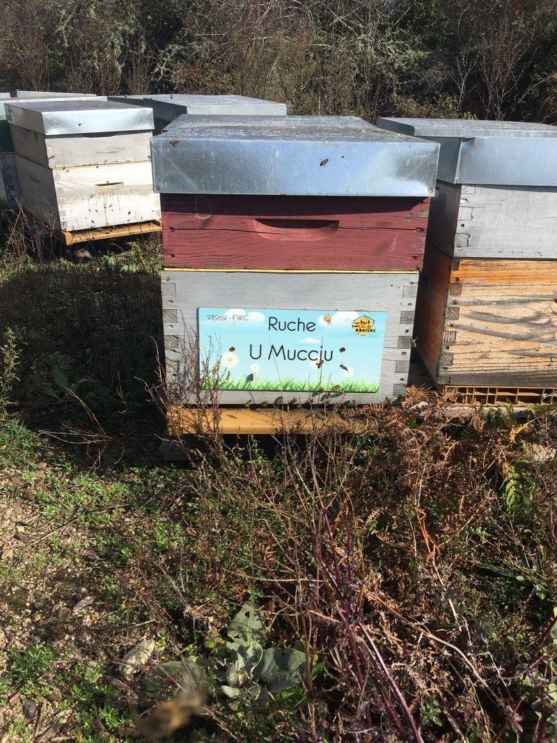 La ruche U Muccju