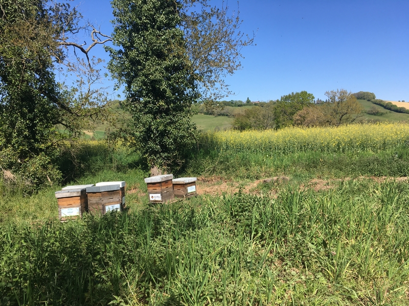 La ruche CITEL