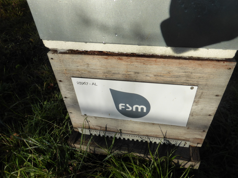 La ruche FSM