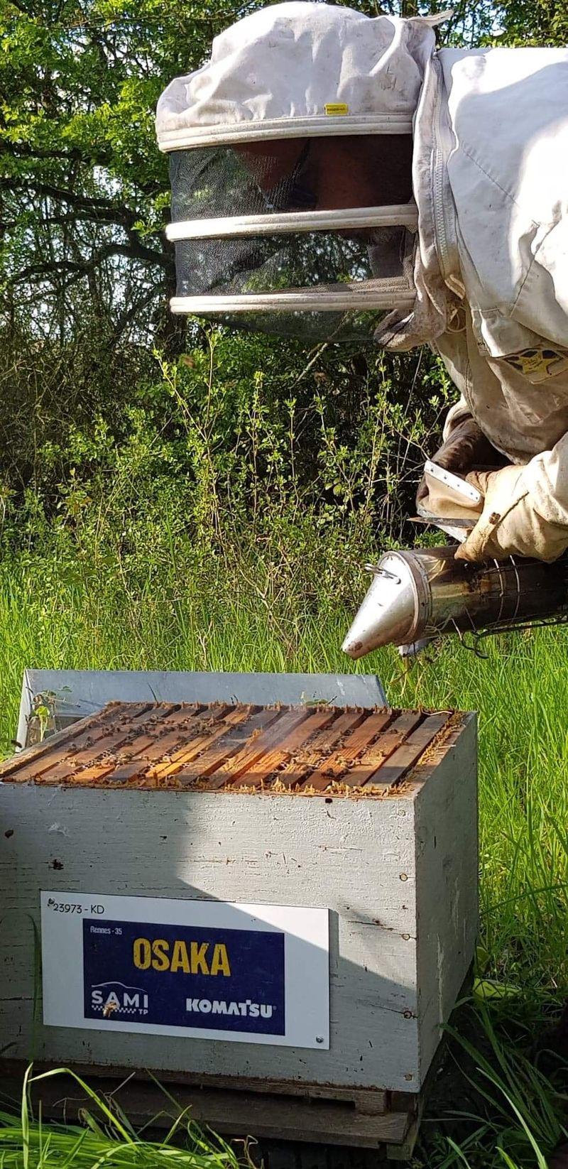 La ruche SAMI TP
