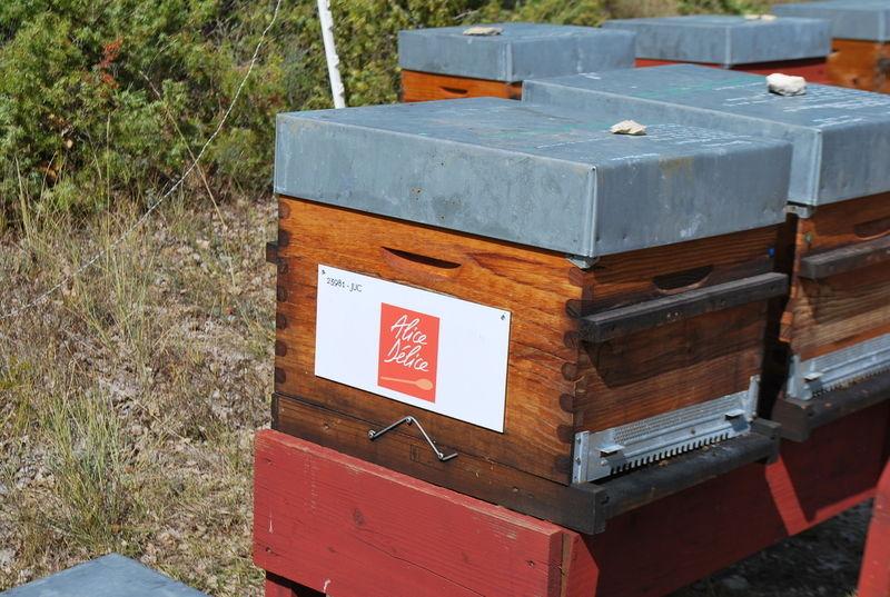 La ruche Alice Délice Nice Etoile