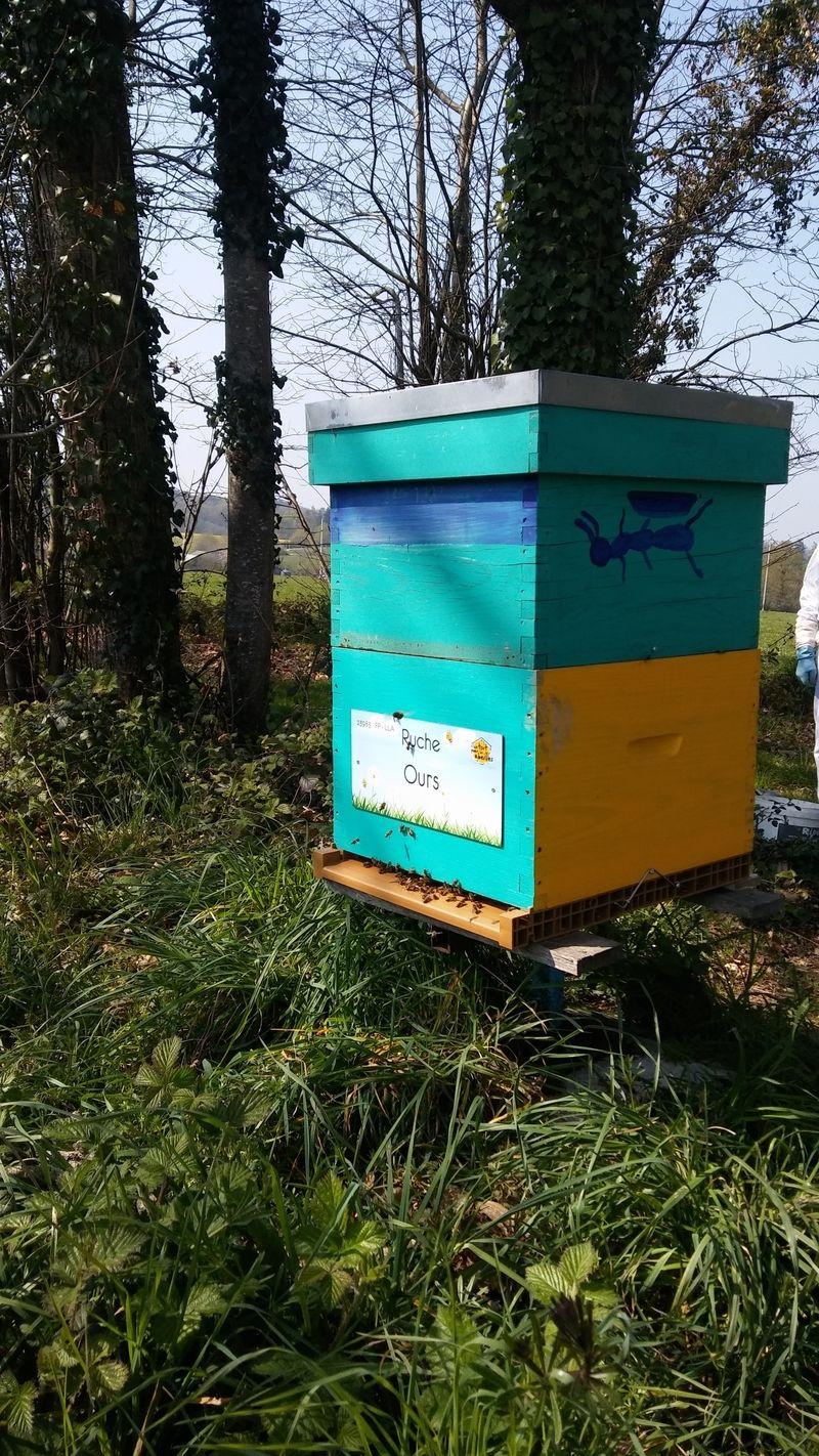 La ruche Ours