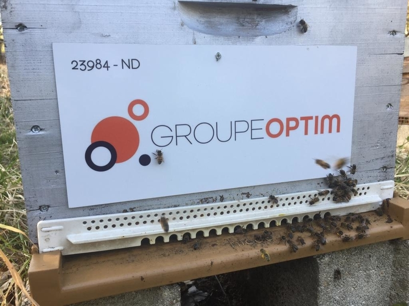 La ruche Groupe optim