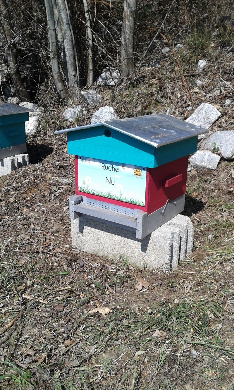 La ruche Nu