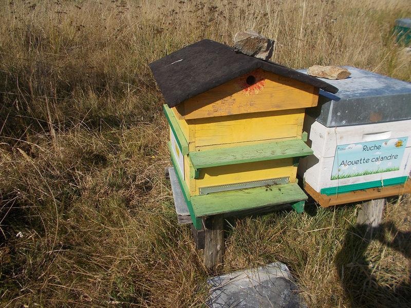 La ruche Alouette calandre