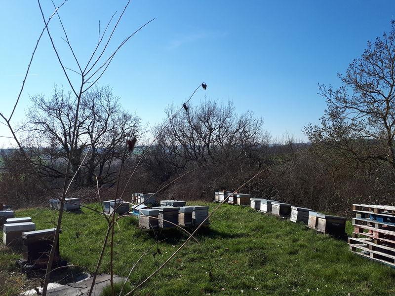 La ruche FREIXENET
