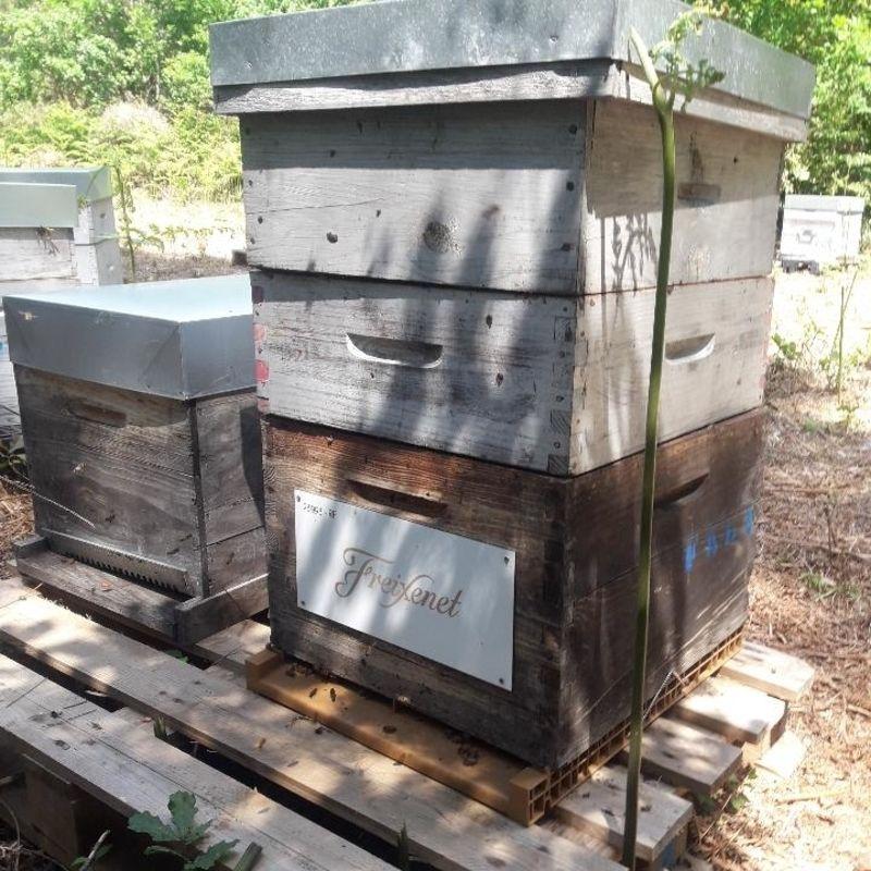 La ruche Freixenet-gratien