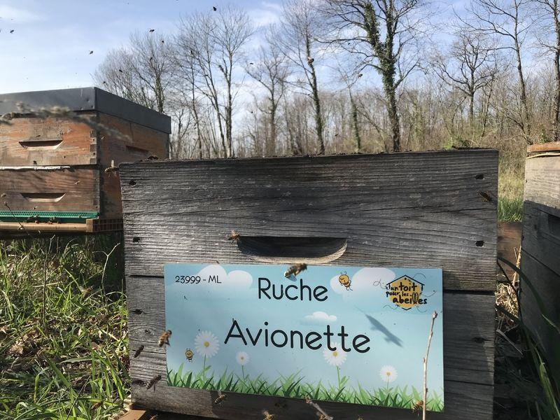 La ruche Avionette