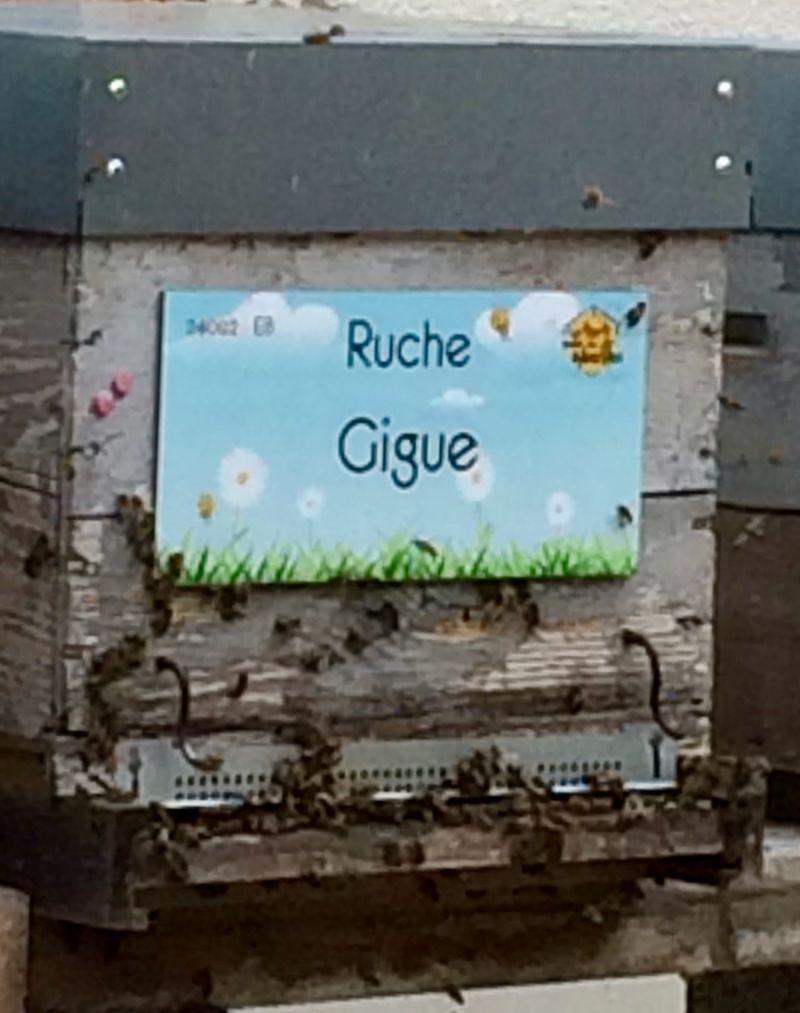 La ruche Gigue