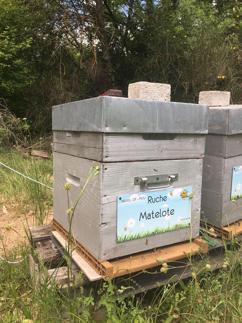 La ruche Matelote