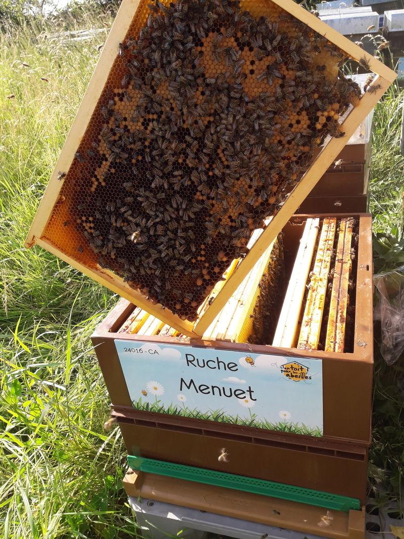 La ruche Menuet