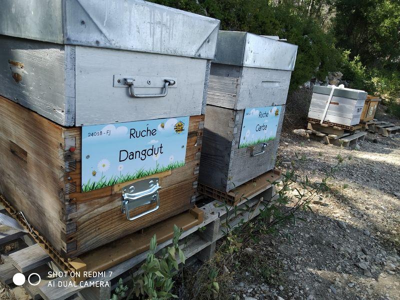 La ruche Dangdut