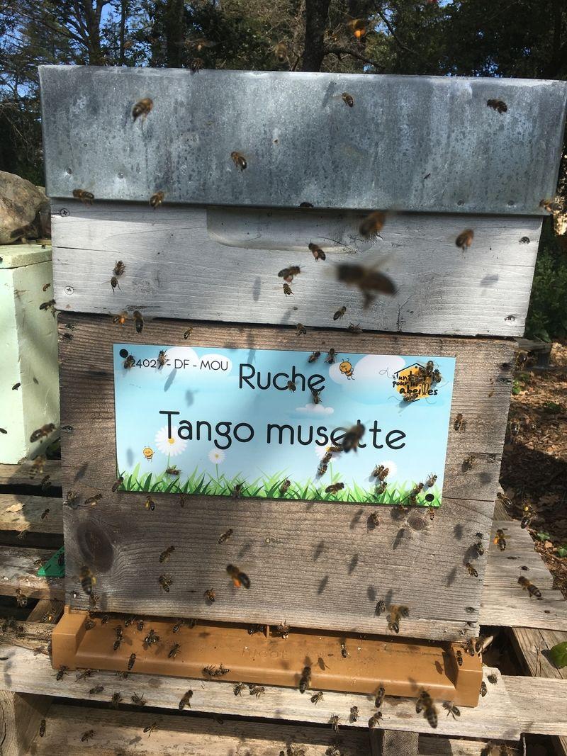 La ruche Tango musette
