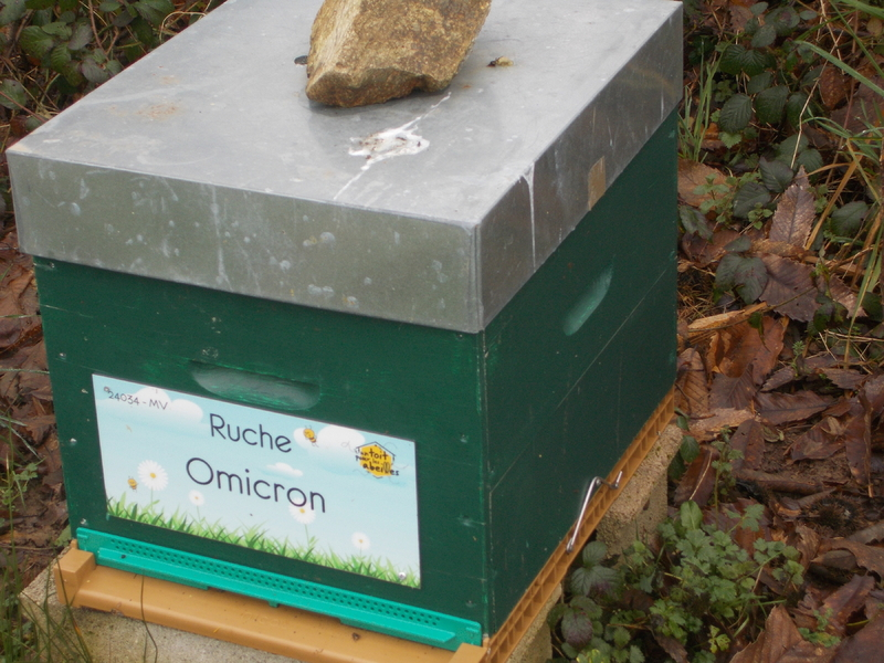 La ruche Omicron