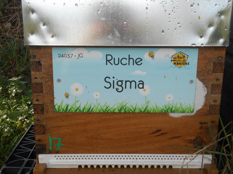La ruche Sigma