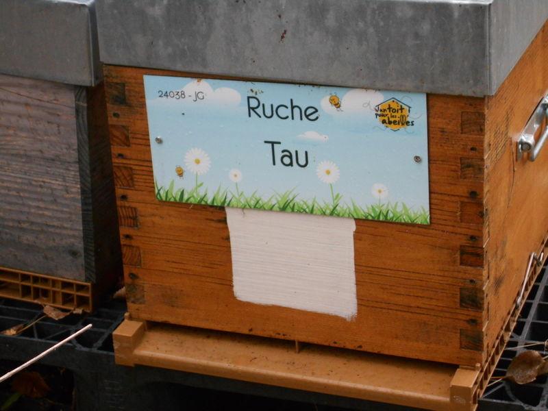 La ruche Tau