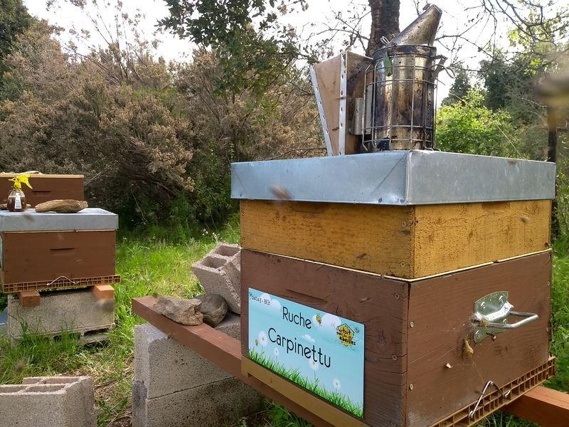La ruche Carpinettu