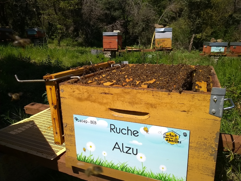 La ruche Alzu