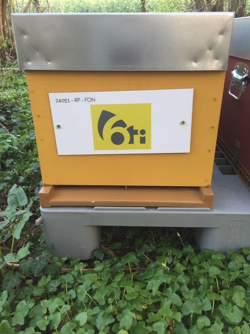 La ruche 6ti conseil