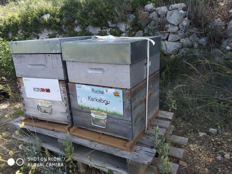 La ruche Karkabou