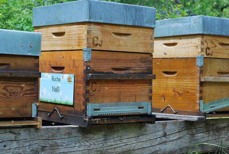 La ruche Naïli