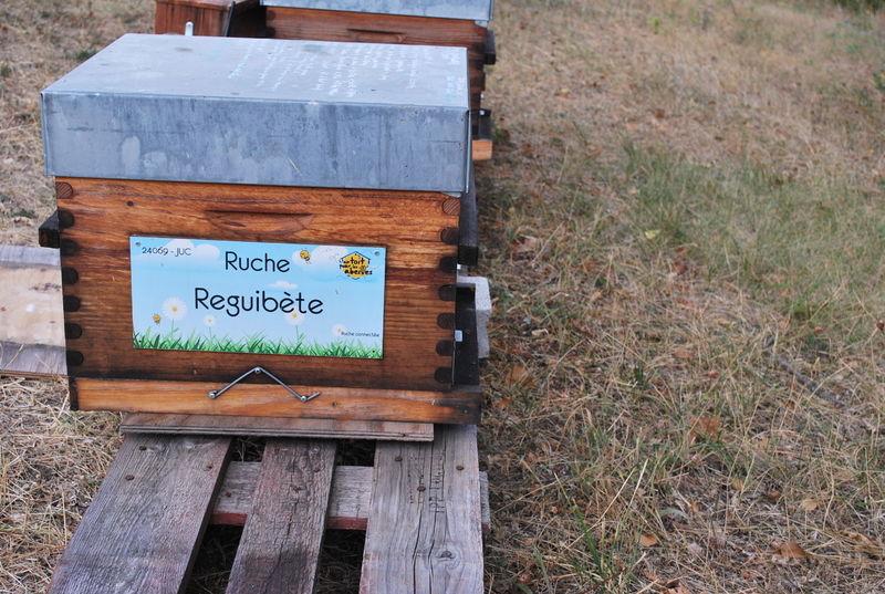 La ruche Reguibète