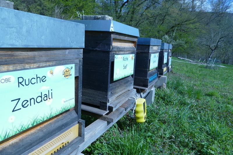 La ruche Zendali