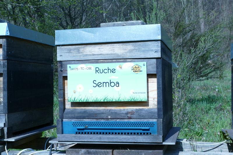 La ruche Semba