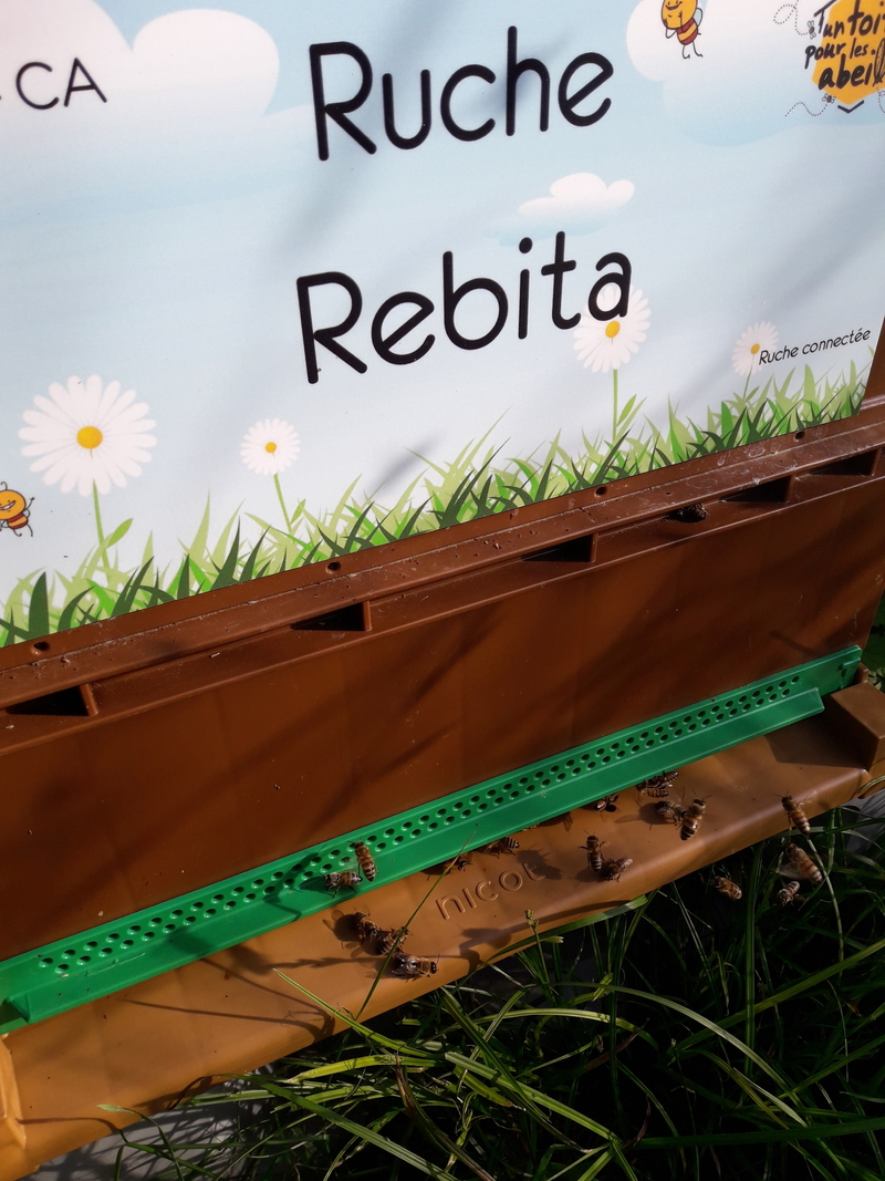 La ruche Rebita