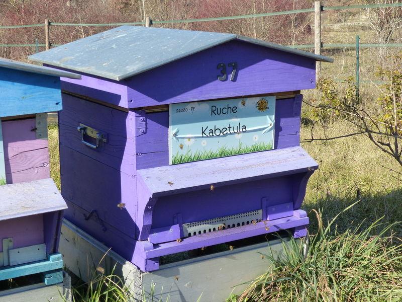 La ruche Kabetula