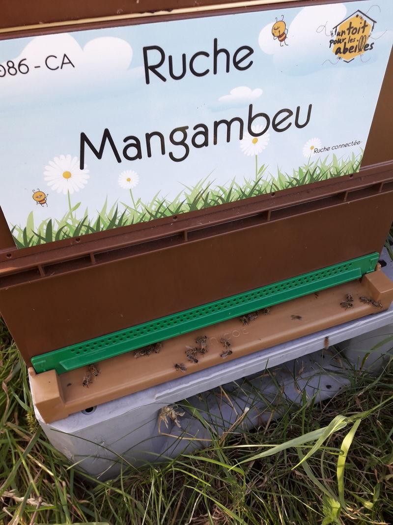 La ruche Mangambeu