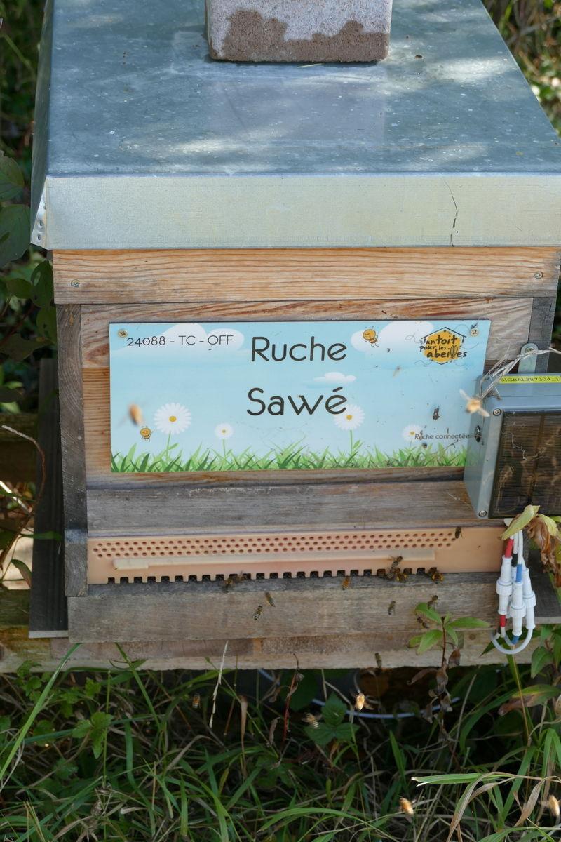 La ruche Sawé