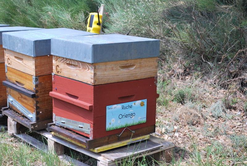 La ruche Oriengo