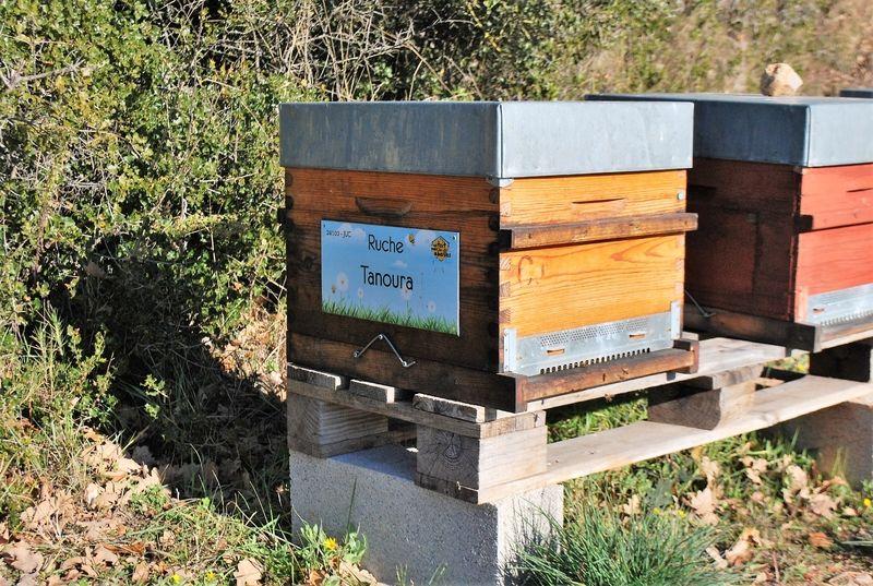 La ruche Tanoura