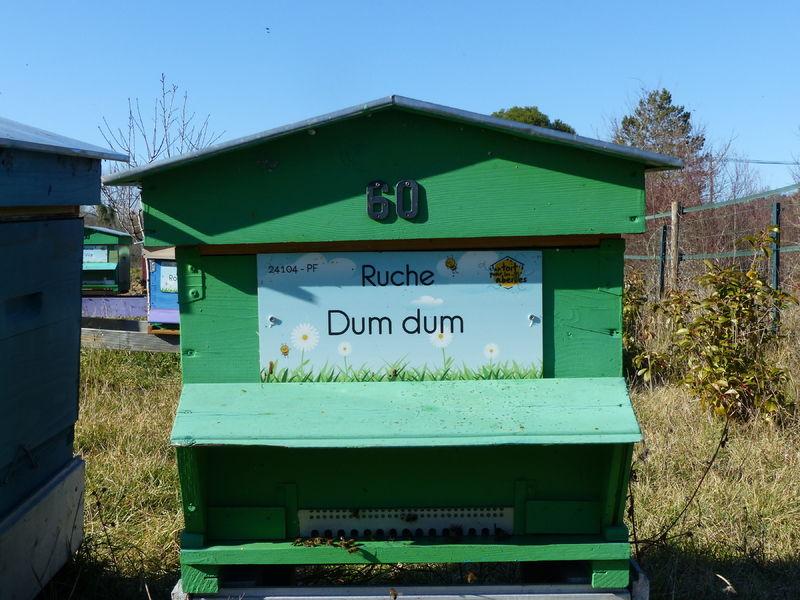 La ruche Dum dum