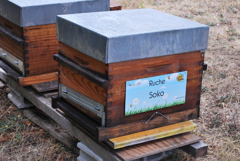 La ruche Soko