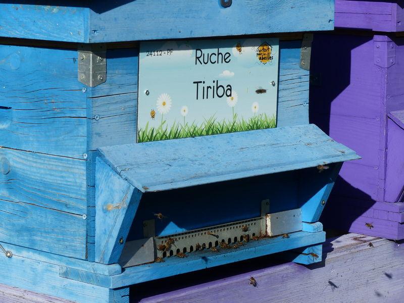 La ruche Tiriba