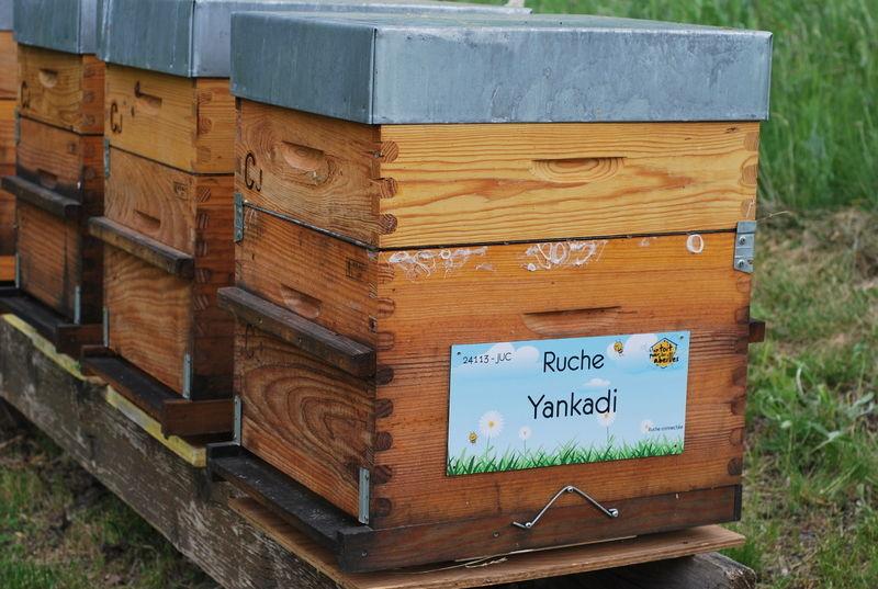 La ruche Yankadi